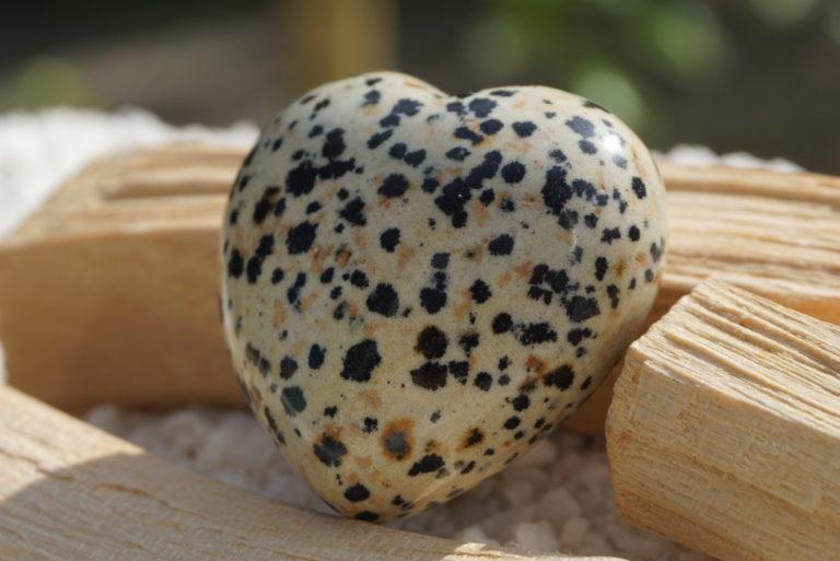 dalmatian-jasper-heart