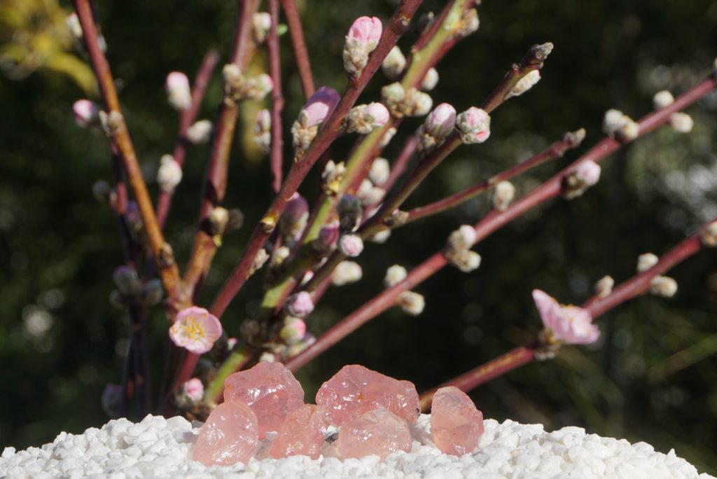 玉垣からの風景㉝ディープローズクォーツと桃の花