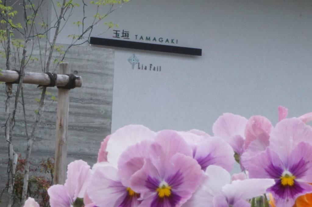 玉垣からの風景㊺令和の色「菫(すみれ)」「桜」