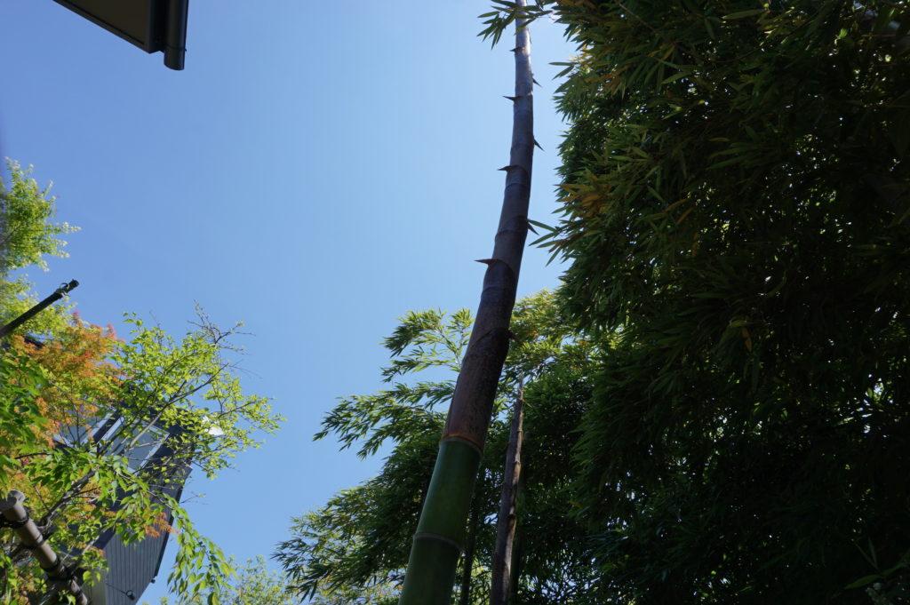 玉垣からの風景㊽竹笋生(たけのこ しょうず)