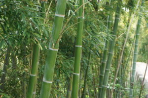 玉垣からの風景-51「天を突く竹」-02