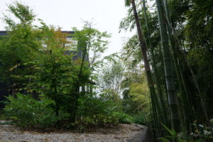 ヤマアジサイ「Stone&Tea玉垣」の庭-03