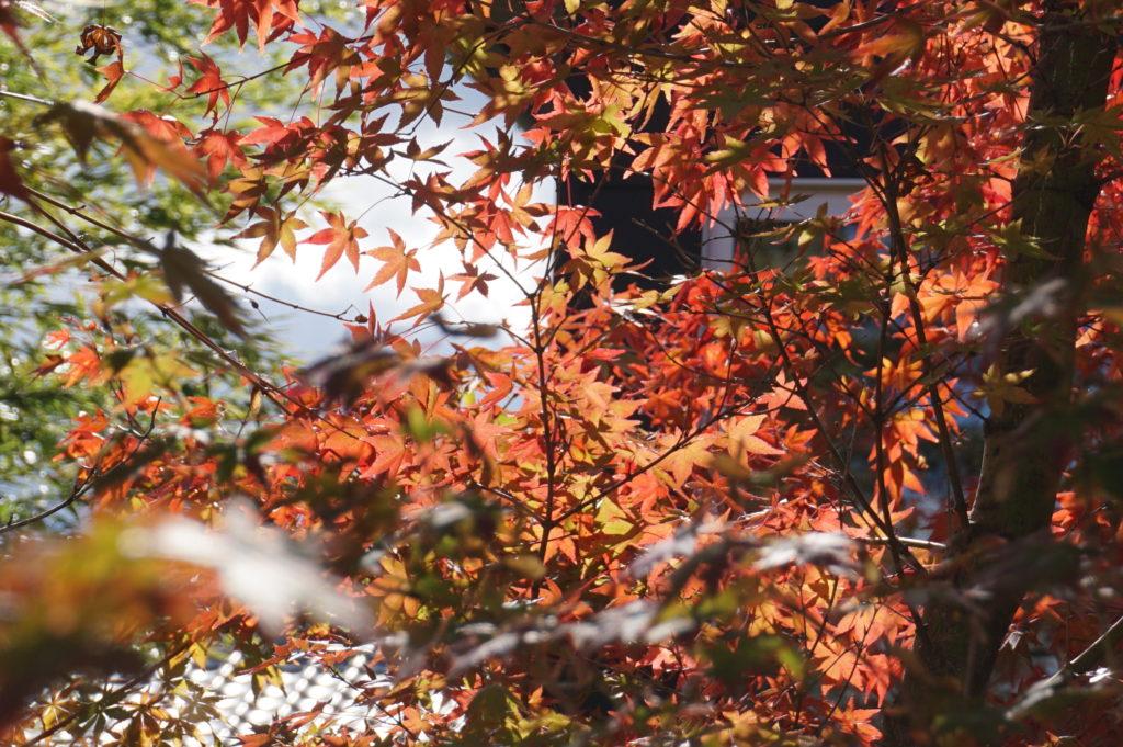 玉垣からの風景 深まる秋