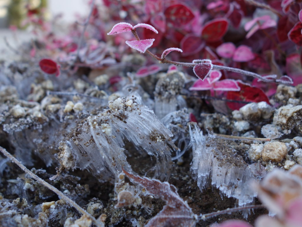 玉垣からの風景 霜柱