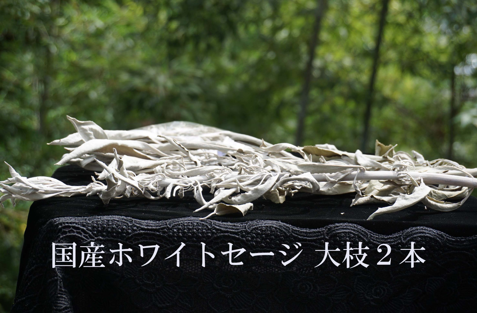 white-sage-kokusan-i02