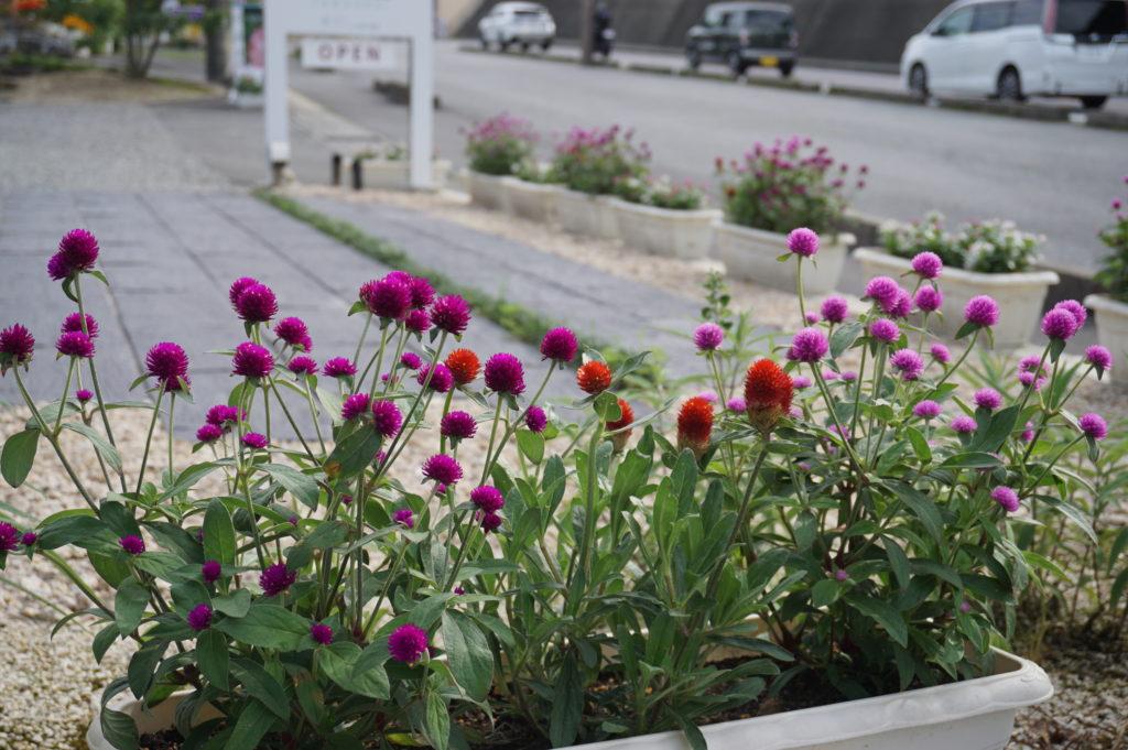 玉垣からの風景 センニチコウ(千日紅) Yellow lily(黄色百合)