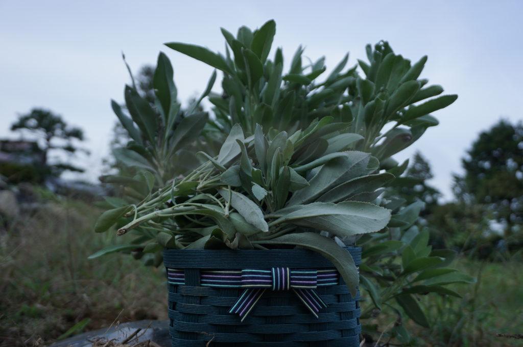 玉垣からの風景 ホワイトセージを育てる 収穫